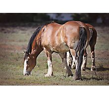Clydesdales Photographic Print