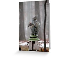 A Little Bit Squirrelly  Greeting Card