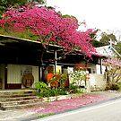 Taroka Gorge: Morning Plum Blossom by Digby