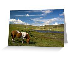 Shetland Summer Grazing Greeting Card