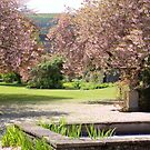 Falkland Palace garden blossom from pond by BronReid
