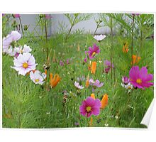 Cosmos and California Poppies 2 Poster
