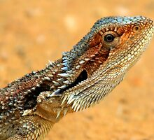 SPIKES AND SCALES by Helen Akerstrom Photography