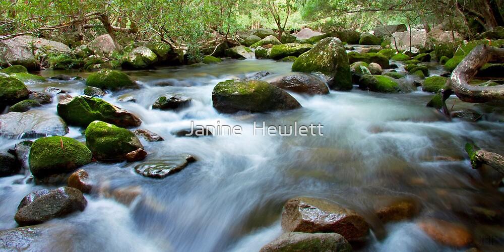 Behana Gorge, FNQ by Janine  Hewlett