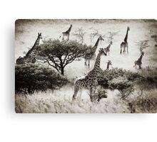 Africa Giraffes at Tala Canvas Print