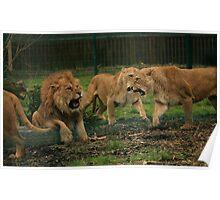 Lion War! Poster