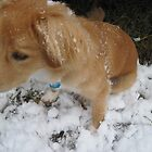 First Snow Day 2 by analisie