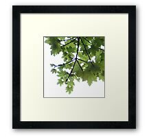 Tree above from below Framed Print