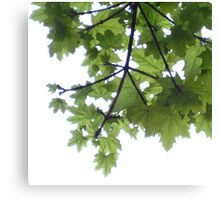 Tree above from below Canvas Print