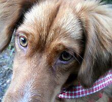 Fox in the hound by Hazel Dean