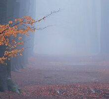 I heard the call of the morning fog by jchanders