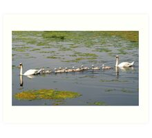 Swan Family Outing Art Print