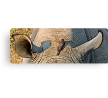 Rhinos Do Have Something Between Their Ears Canvas Print