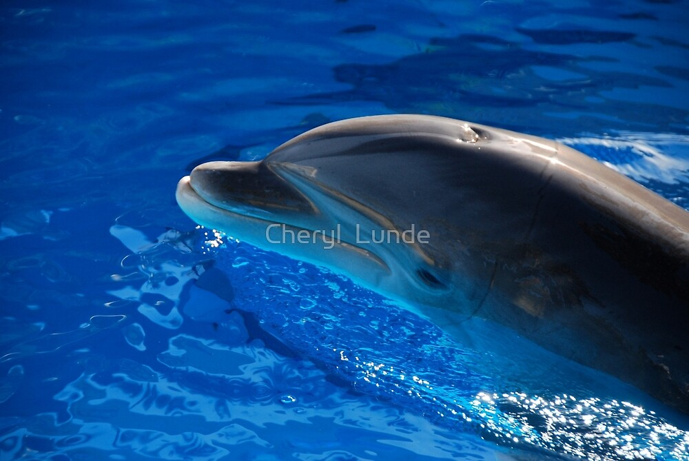 Dolphin Encounter by Cheryl  Lunde