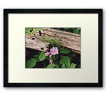 Cosmos and Cedar Fence Framed Print