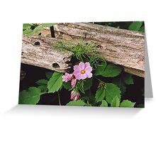 Cosmos and Cedar Fence Greeting Card