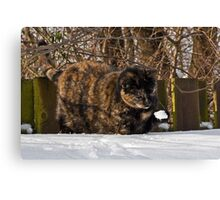 A snowball! How exciting! Canvas Print