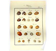 Neues systematisches Conchylien-Cabinet - 396 Poster