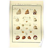 Neues systematisches Conchylien-Cabinet - 385 Poster