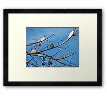 Blue Sky - Yellow Finch Framed Print