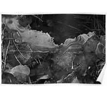 Leaves Frozen in Ice Poster