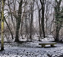 Empty bench in the park by Luca Renoldi