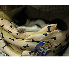 Kitten for Sale Photographic Print