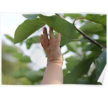 Reaching Poster