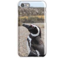 Magellanic Penguin At Punta Tombo iPhone Case/Skin
