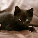 what a cutie?!... by stellaozza