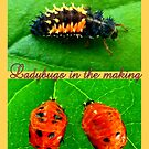 Ladybugs in the making by ©The Creative  Minds