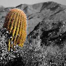 Arizona Cactus by doctorphoto
