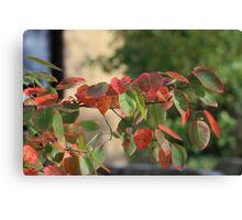 Kansas Colorful Fall leave's shot closeup Canvas Print