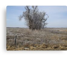 Kansas Icy Morning in a field Canvas Print