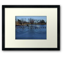 Canadian Geese  Resting on Blue Ice Framed Print