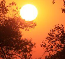Blaze Orange Kansas Sunset with Tree silhouette's Sticker