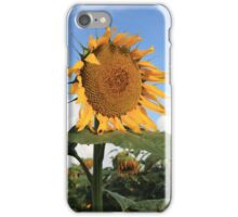 Kansas Coutry Sunflower Phone Case iPhone Case/Skin