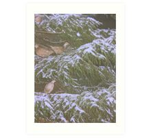"""""""and a pheasant in a fir tree"""" Art Print"""