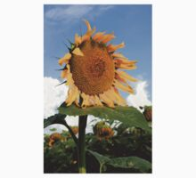 Kansas Coutry Sunflower Phone Case Baby Tee