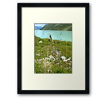 Swaying Grass In Austrian Mountains Framed Print