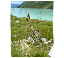 Swaying Grass In Austrian Mountains Poster