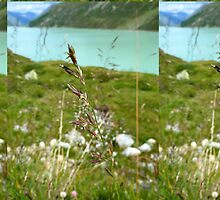 Swaying Grass In Austrian Mountains by MissBeloved