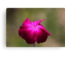 Red Pink Canvas Print
