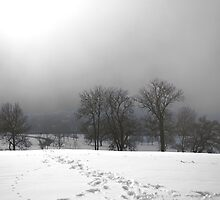 Trees in the snow and fog by Michael Brewer