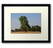 Kansas Country  Tree in a Pasture Framed Print
