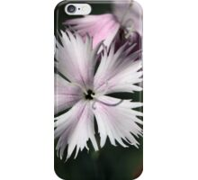 Cheddar pink (Dianthus gratianopolitanus) iPhone Case/Skin