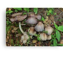 Mushroom close up in a Yard Canvas Print
