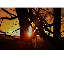 Dead Tree Sunset in Kansas Photographic Print