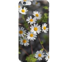 Feverfew Flowers (Tanacetum parthenium). iPhone Case/Skin