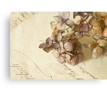 Winter Hydrangea Flowers Canvas Print